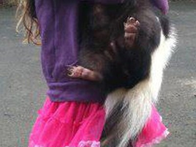 DAUGHTERS BEST FRIEND IS A SKUNK